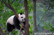 Животные Китая. Описания, названия и особенности животных Китая