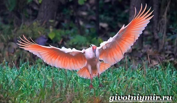 Животные-Китая-Описания-названия-и-особенности-животных-Китая-10