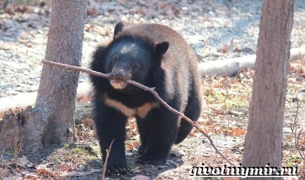 Животные-Китая-Описания-названия-и-особенности-животных-Китая-4