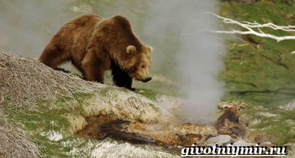 Животные-Красной-книги-Украины-1