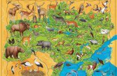 Животные Красной книги Украины