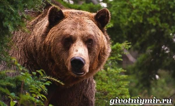 Животные-Красной-книги-Украины-3