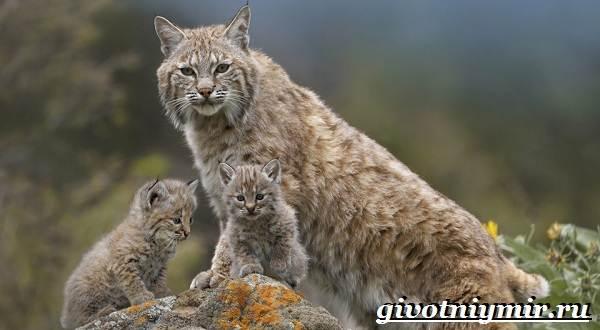 Животные-Красной-книги-Украины-4