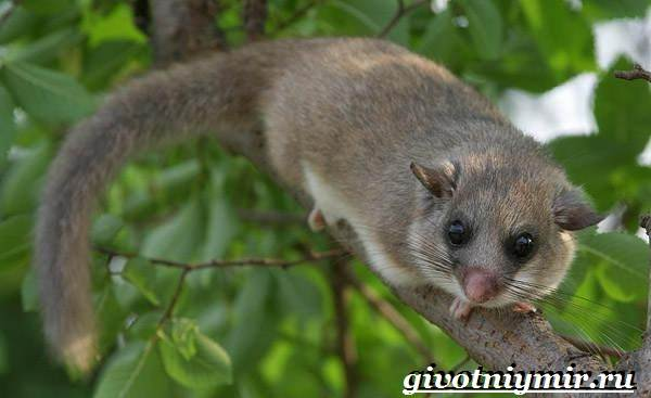 Животные-Японии-Описание-названия-и-особенности-животных-Японии-10