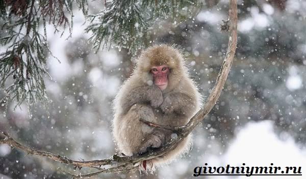 Животные-Японии-Описание-названия-и-особенности-животных-Японии-5