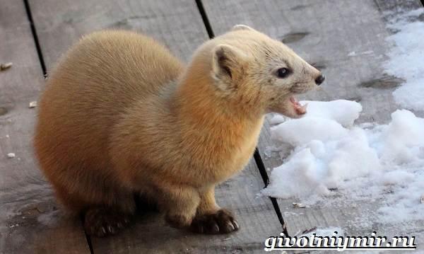 Животные-Японии-Описание-названия-и-особенности-животных-Японии-7