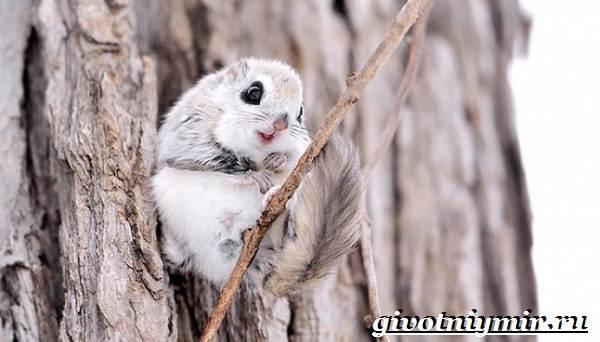 Животные-Японии-Описание-названия-и-особенности-животных-Японии-8