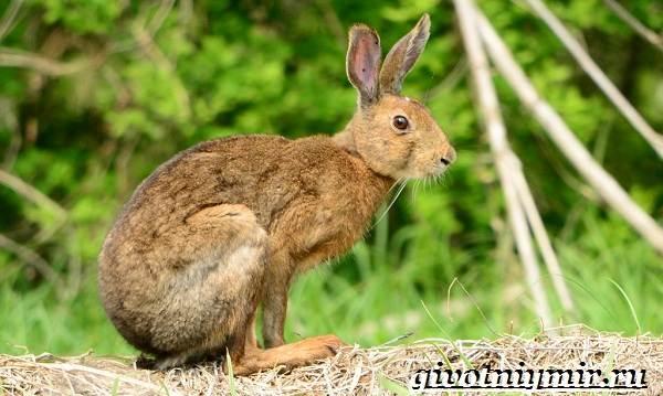 Животные-Японии-Описание-названия-и-особенности-животных-Японии-9