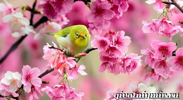 Животные-Японии-Описание-названия-и-особенности-животных-Японии