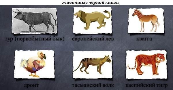 Черная-книга-животных-Животные-занесённые-в-черную-книгу-1