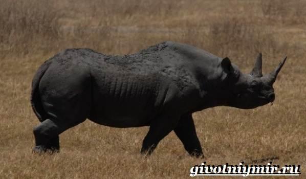 Черная-книга-животных-Животные-занесённые-в-черную-книгу-27