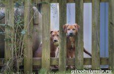 Сторожевые собаки. Описание, названия и особенности сторожевых собак