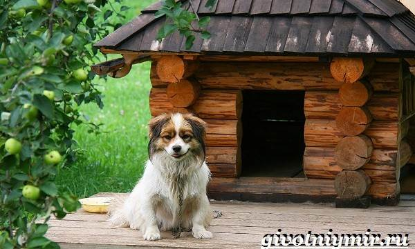 Сторожевые-собаки-Описание-названия-и-особенности-сторожевых-собак-2