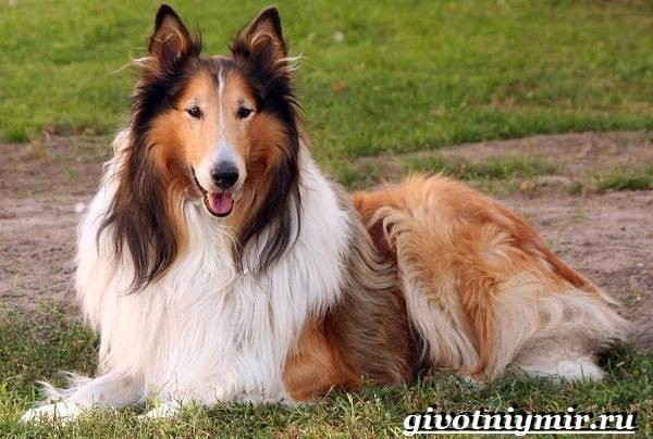Сторожевые-собаки-Описание-названия-и-особенности-сторожевых-собак-22