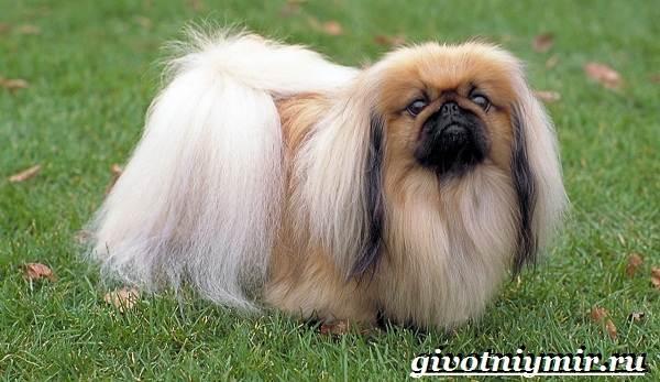 Сторожевые-собаки-Описание-названия-и-особенности-сторожевых-собак-23