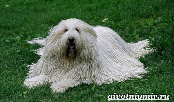 Сторожевые-собаки-Описание-названия-и-особенности-сторожевых-собак-5