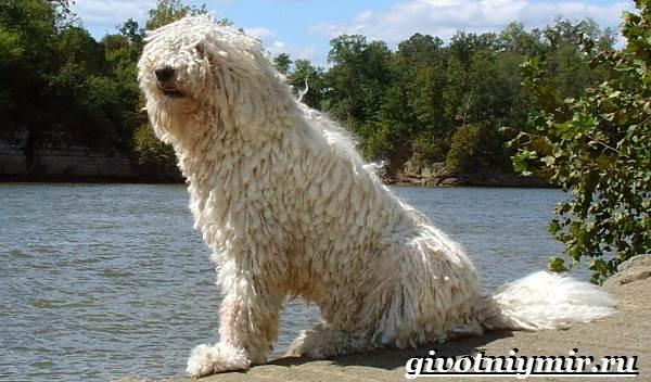 Сторожевые-собаки-Описание-названия-и-особенности-сторожевых-собак-6
