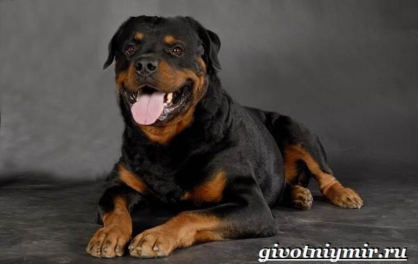 Сторожевые-собаки-Описание-названия-и-особенности-сторожевых-собак-7
