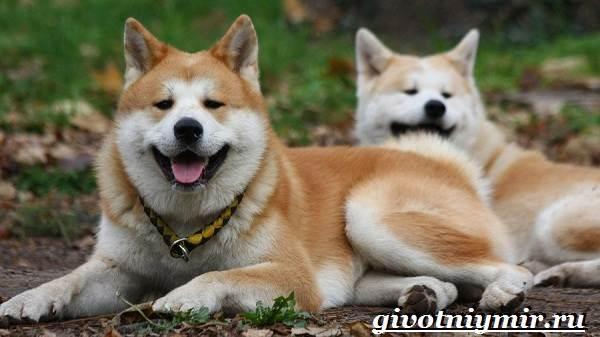 Сторожевые-собаки-Описание-названия-и-особенности-сторожевых-собак-8