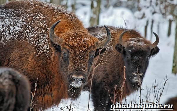 Животные-Европы-Описание-названия-и-особенности-животных-Европы-1