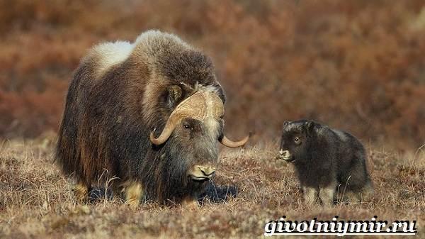 Животные-Европы-Описание-названия-и-особенности-животных-Европы-12