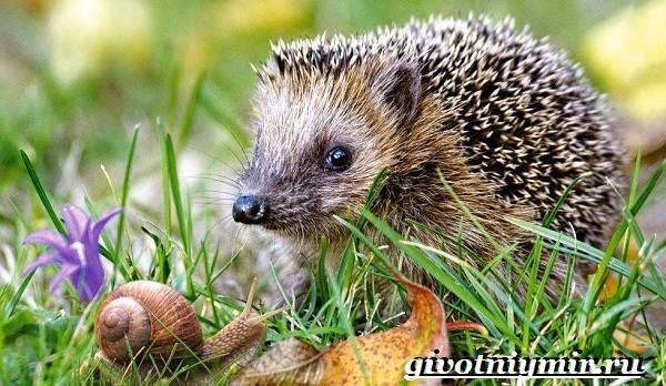 Животные-Европы-Описание-названия-и-особенности-животных-Европы-14