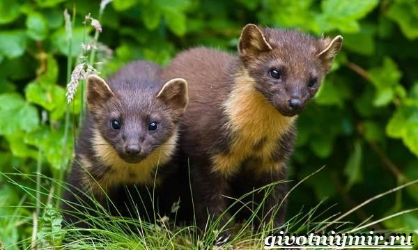 Животные-Европы-Описание-названия-и-особенности-животных-Европы-19