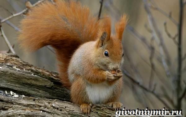 Животные-Европы-Описание-названия-и-особенности-животных-Европы-22