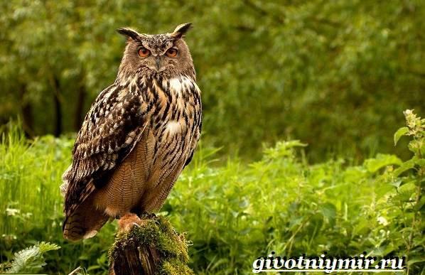 Животные-Европы-Описание-названия-и-особенности-животных-Европы-32