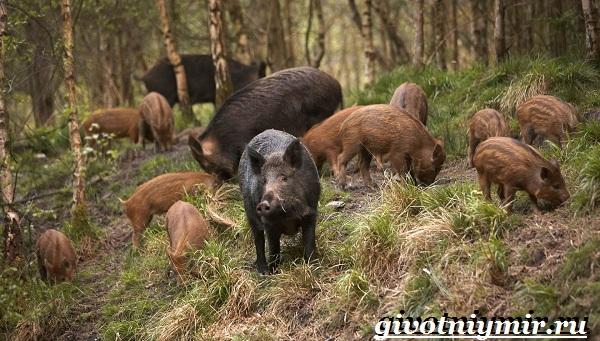 Животные-Европы-Описание-названия-и-особенности-животных-Европы-37