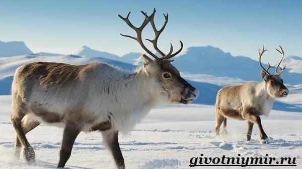 Животные-Европы-Описание-названия-и-особенности-животных-Европы-4