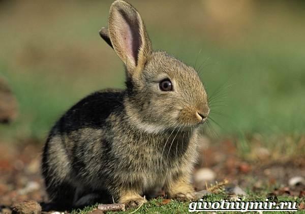 Животные-Европы-Описание-названия-и-особенности-животных-Европы-5