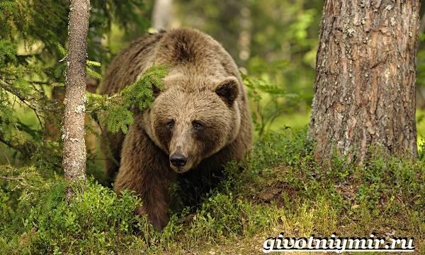 Животные-Европы-Описание-названия-и-особенности-животных-Европы-6