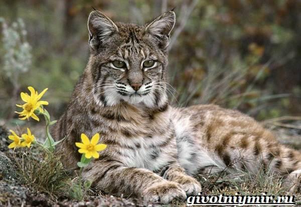 Животные-Европы-Описание-названия-и-особенности-животных-Европы-7