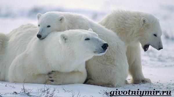 Животные-Европы-Описание-названия-и-особенности-животных-Европы-9