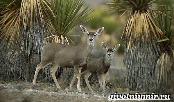 Животные-Мексики-Описание-названия-и-особенности-животных-Мексики-1