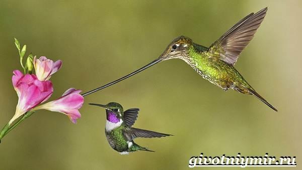 Животные-Мексики-Описание-названия-и-особенности-животных-Мексики-15