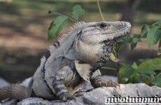 Животные Мексики. Описание, названия и особенности животных Мексики
