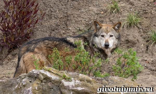 Животные-Мексики-Описание-названия-и-особенности-животных-Мексики-5