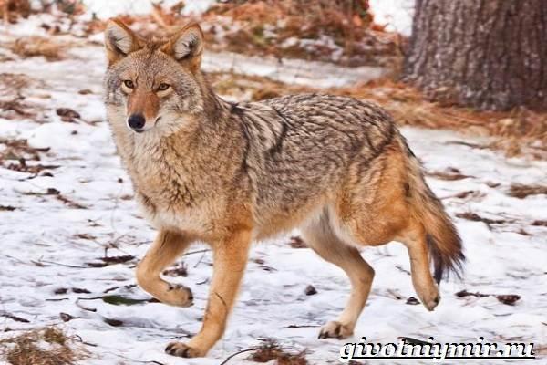 Животные-Мексики-Описание-названия-и-особенности-животных-Мексики-7