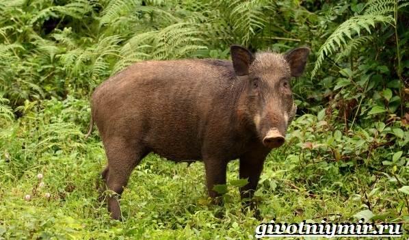 Животные-Мексики-Описание-названия-и-особенности-животных-Мексики-9
