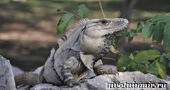 Животные-Мексики-Описание-названия-и-особенности-животных-Мексики