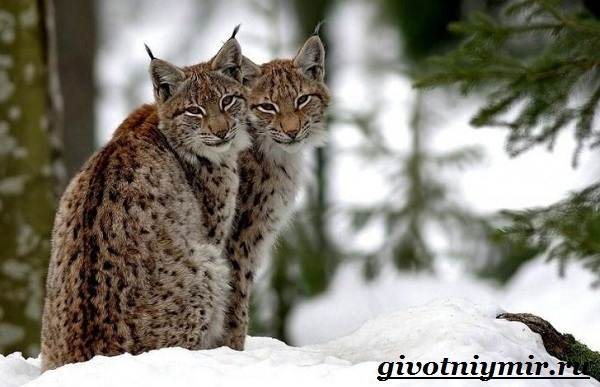 Животные-Украины-Описание-названия-и-особенности-животных-Украины-11
