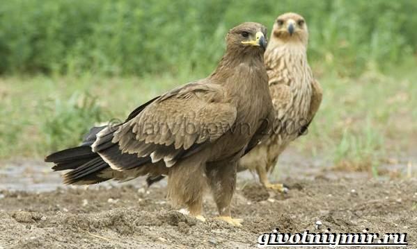 Животные-Украины-Описание-названия-и-особенности-животных-Украины-16