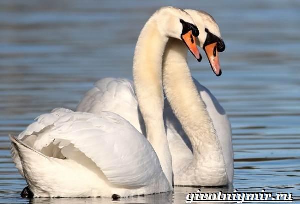 Животные-Украины-Описание-названия-и-особенности-животных-Украины-18