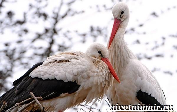 Животные-Украины-Описание-названия-и-особенности-животных-Украины-19