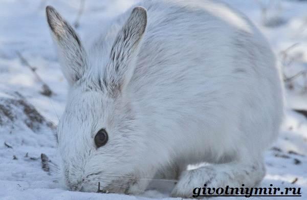 Животные-Украины-Описание-названия-и-особенности-животных-Украины-2
