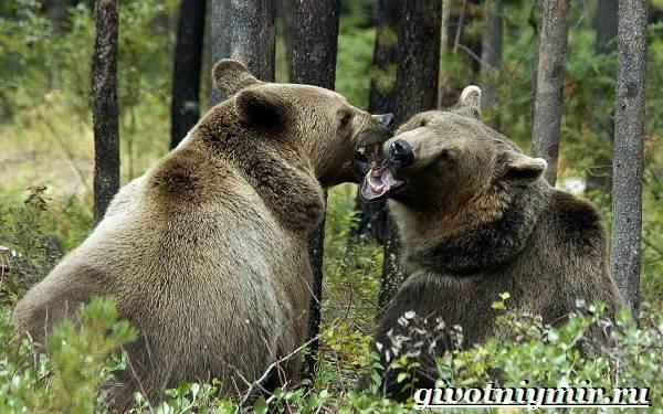 Животные-Украины-Описание-названия-и-особенности-животных-Украины-23