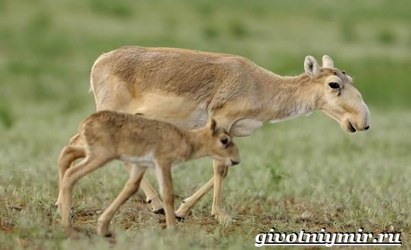 Животные-Украины-Описание-названия-и-особенности-животных-Украины-3