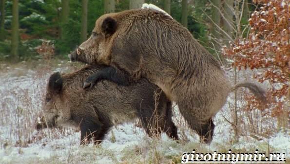 Животные-Украины-Описание-названия-и-особенности-животных-Украины-6